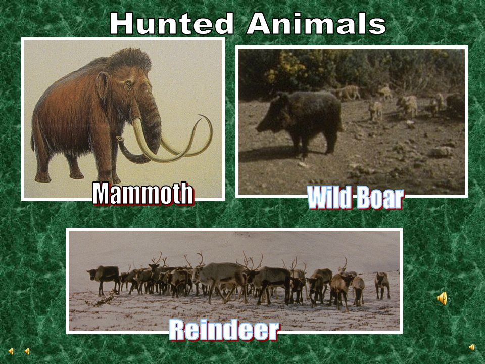 Hunted Animals Mammoth Wild Boar Reindeer