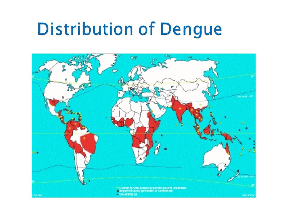 Distribution of Dengue