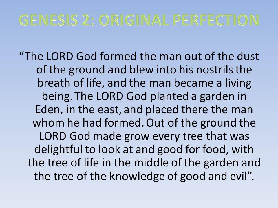 GENESIS 2: ORIGINAL PERFECTION