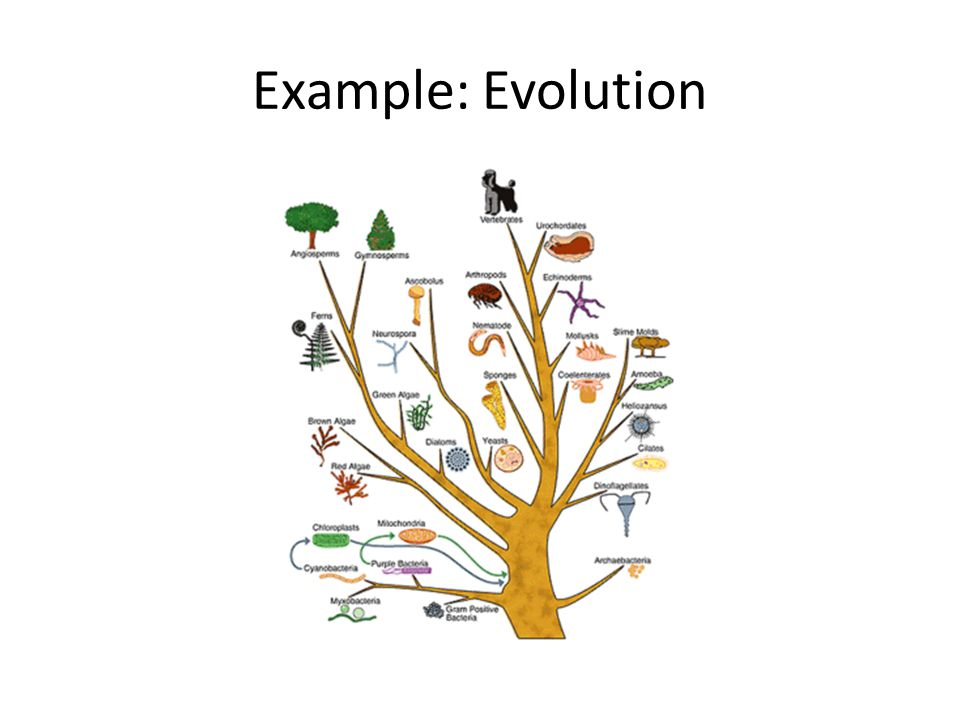 Example: Evolution