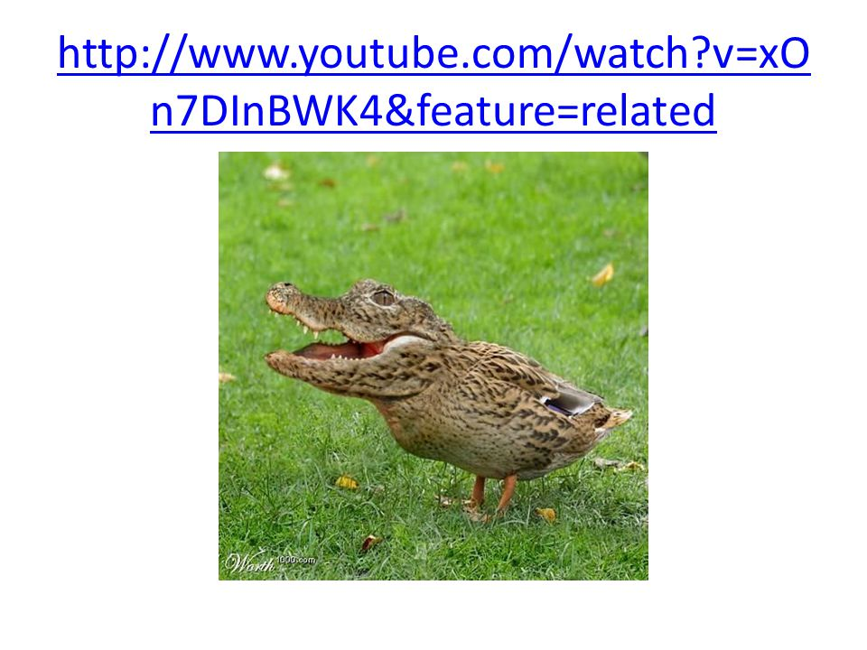 http://www.youtube.com/watch v=xOn7DInBWK4&feature=related
