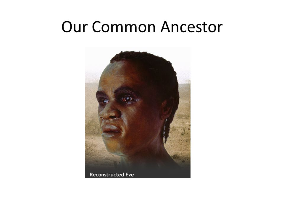 Our Common Ancestor
