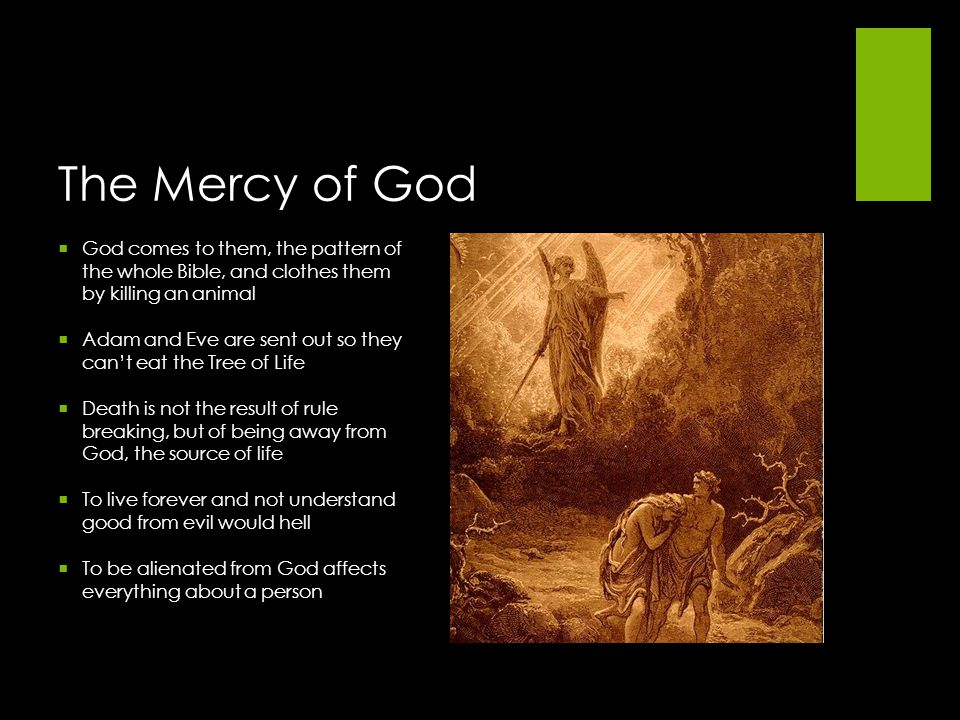 The Mercy of God God comes to them, the pattern of the whole Bible, and clothes them by killing an animal.