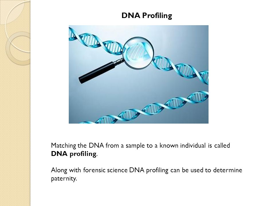 DNA Profiling Matching the DNA from a sample to a known individual is called DNA profiling.