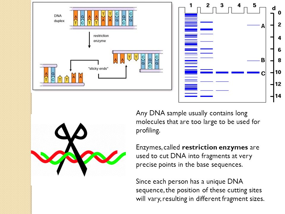 Any DNA sample usually contains long molecules that are too large to be used for profiling.