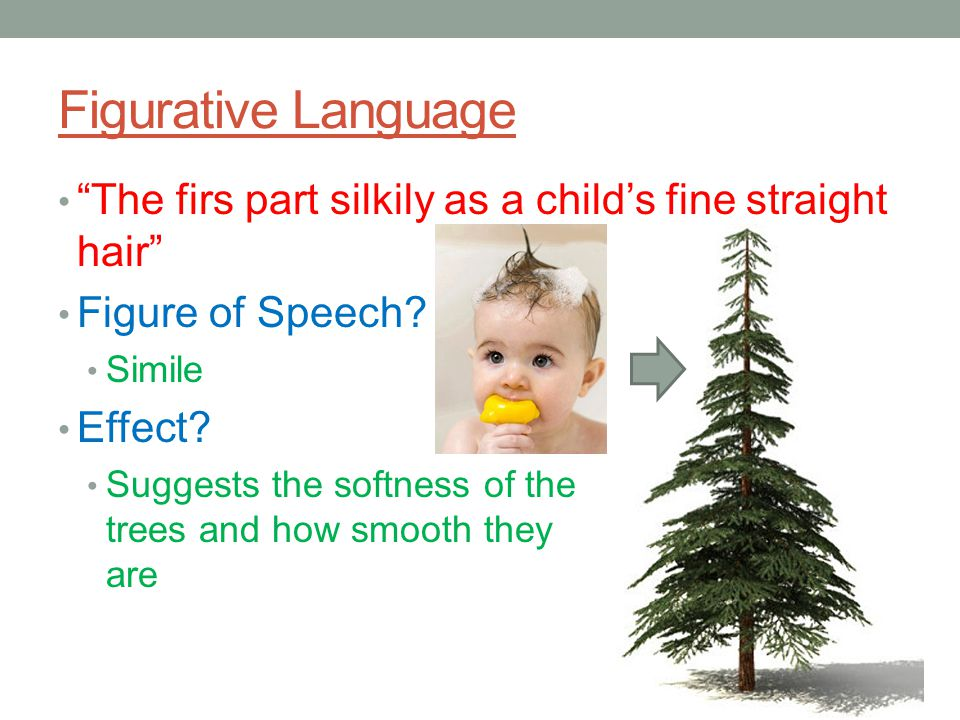 Figurative Language The firs part silkily as a child's fine straight hair Figure of Speech Simile.