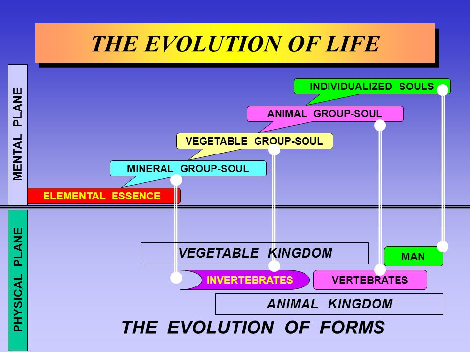 THE EVOLUTION OF LIFE THE EVOLUTION OF FORMS VEGETABLE KINGDOM