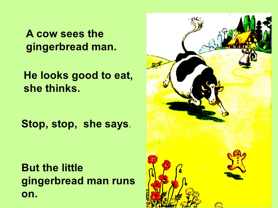 A cow sees the gingerbread man.