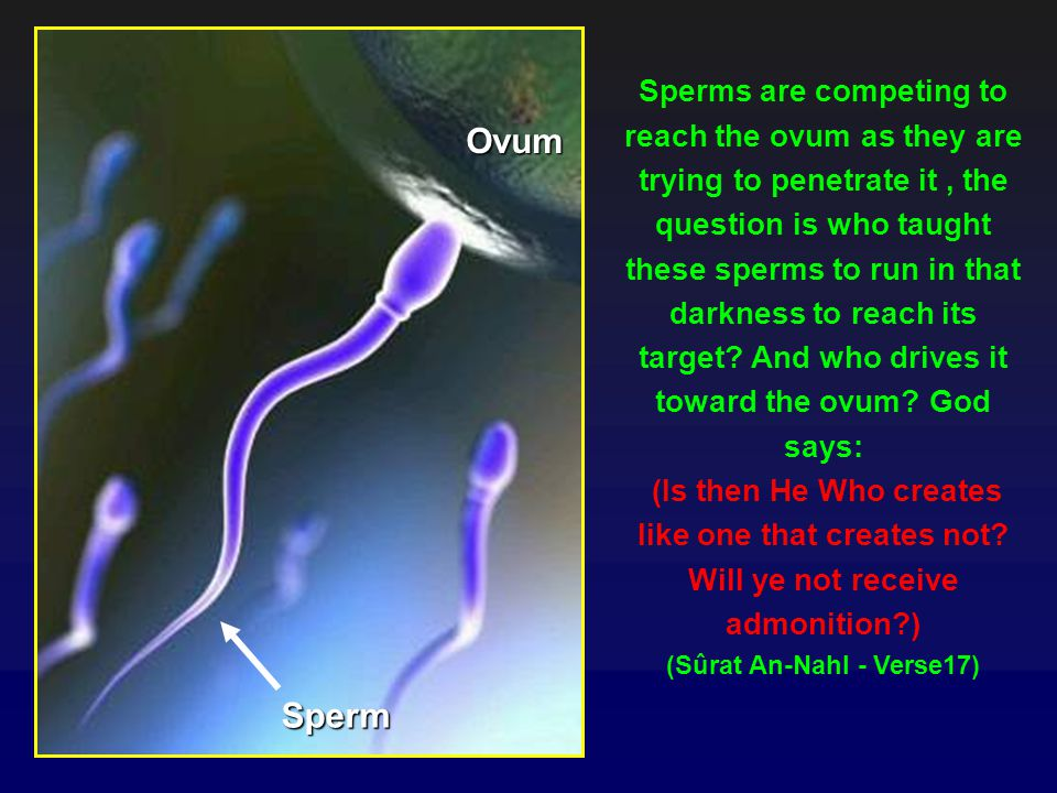 Sperms are competing to reach the ovum as they are trying to penetrate it , the question is who taught these sperms to run in that darkness to reach its target And who drives it toward the ovum God says: