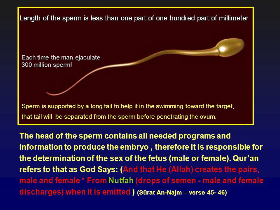 Length of the sperm is less than one part of one hundred part of millimeter