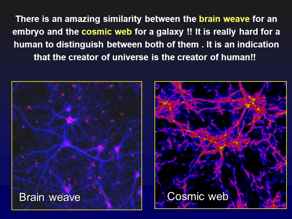There is an amazing similarity between the brain weave for an embryo and the cosmic web for a galaxy !! It is really hard for a human to distinguish between both of them . It is an indication that the creator of universe is the creator of human!!