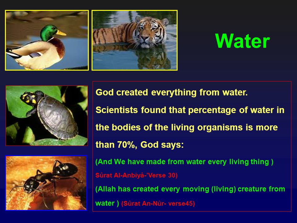 Water God created everything from water. Scientists found that percentage of water in the bodies of the living organisms is more than 70%, God says: