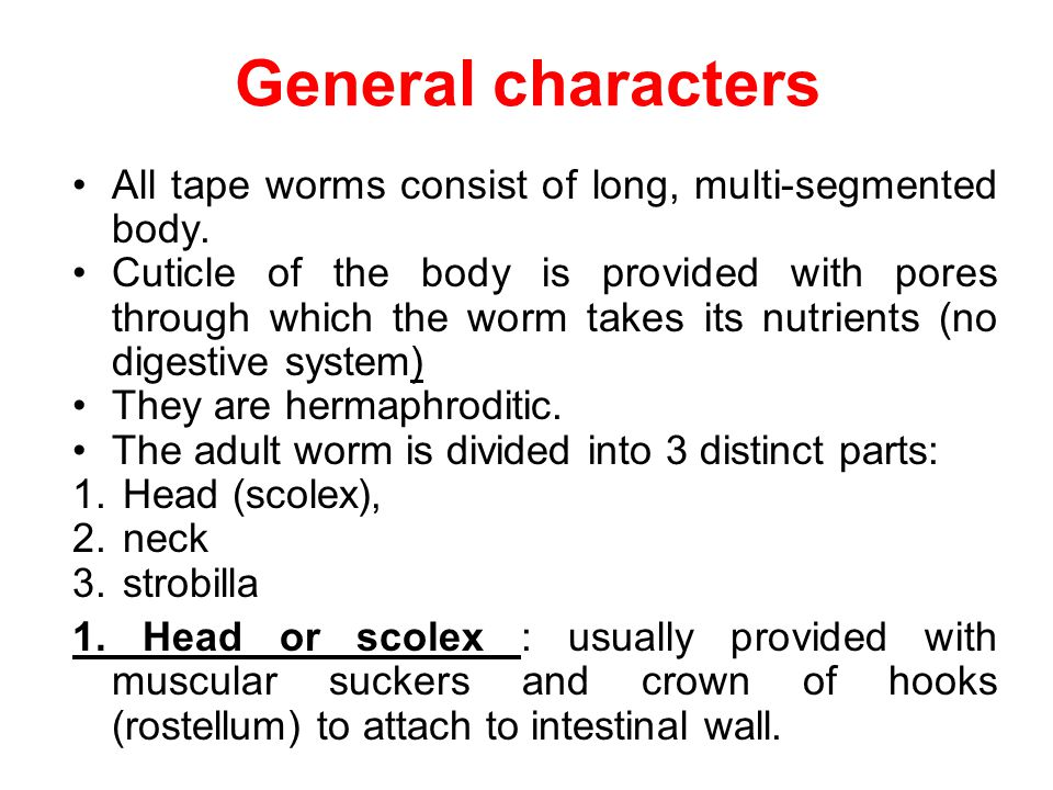 General characters All tape worms consist of long, multi-segmented body.