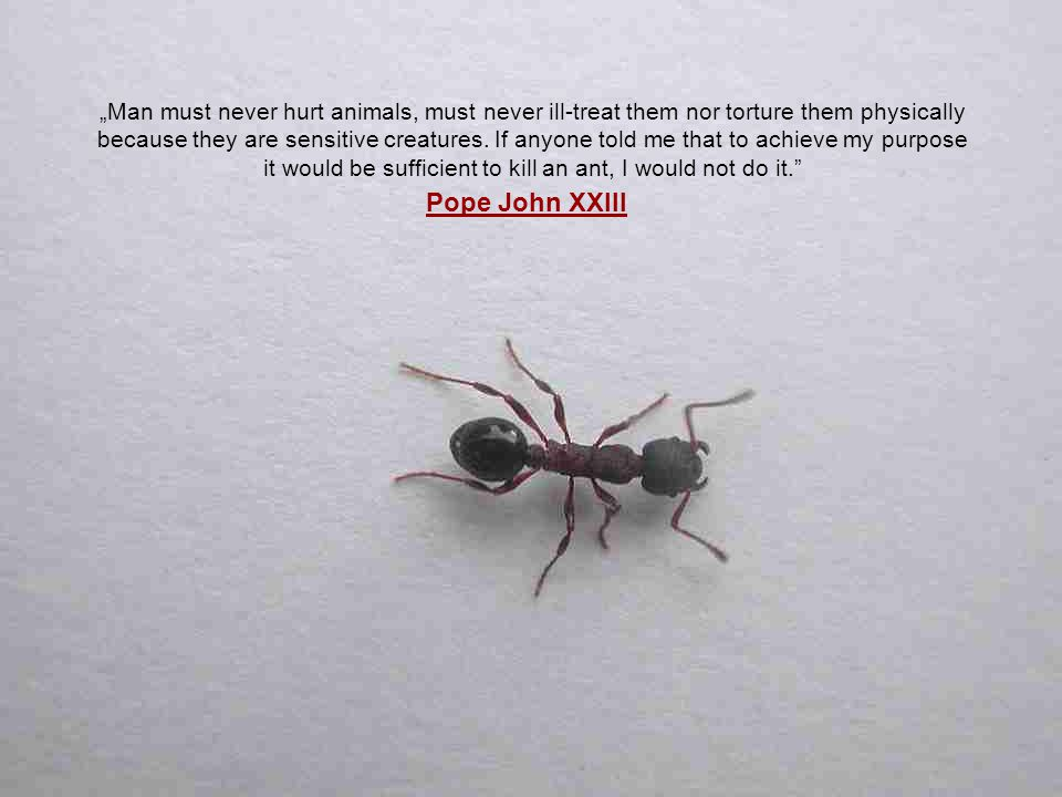 """Man must never hurt animals, must never ill-treat them nor torture them physically because they are sensitive creatures. If anyone told me that to achieve my purpose it would be sufficient to kill an ant, I would not do it."