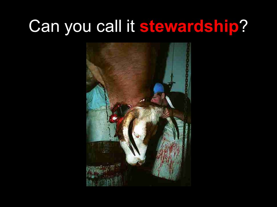 Can you call it stewardship
