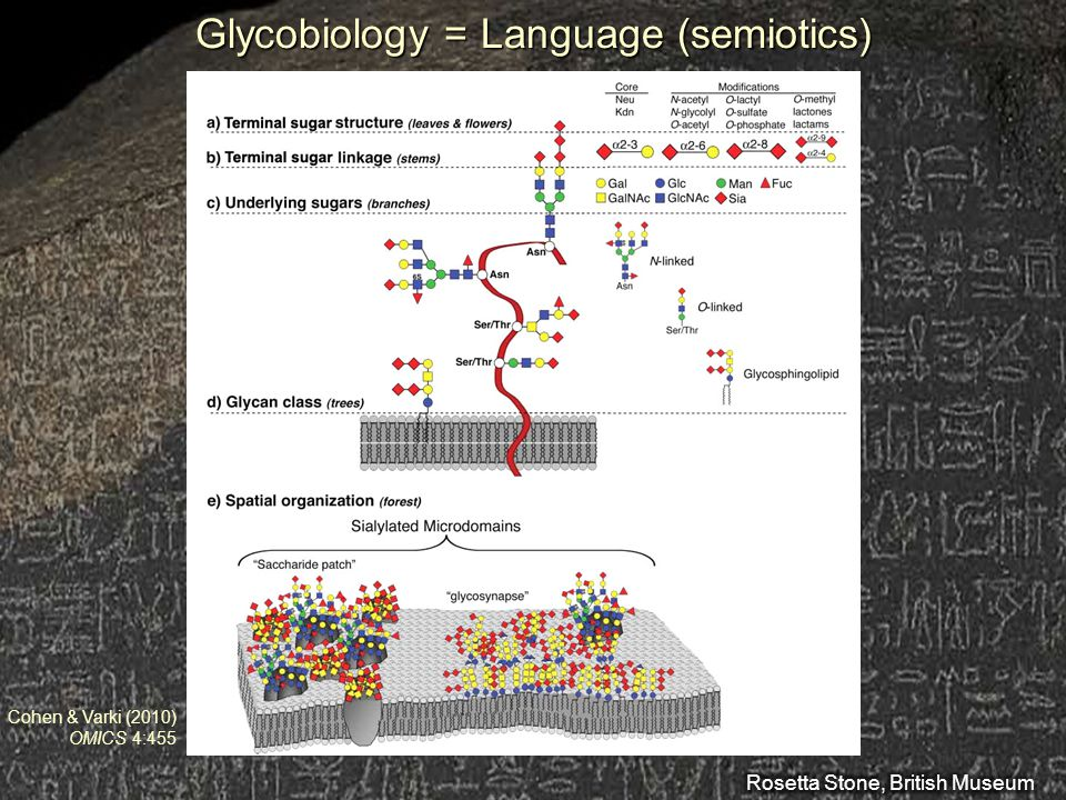 Glycobiology = Language (semiotics)