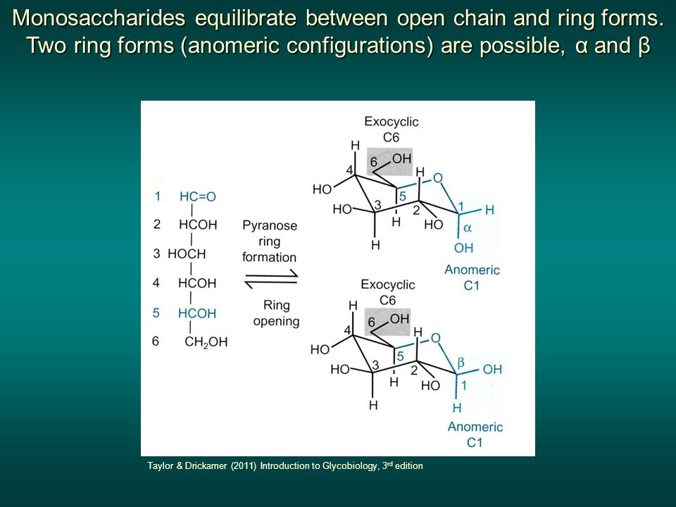 Monosaccharides equilibrate between open chain and ring forms
