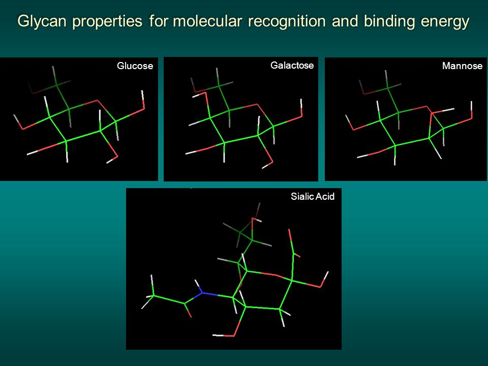 Glycan properties for molecular recognition and binding energy