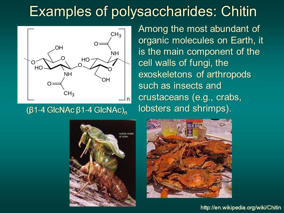 Examples of polysaccharides: Chitin