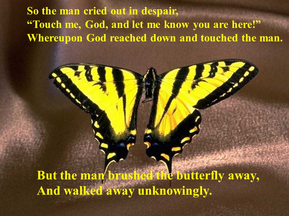 But the man brushed the butterfly away, And walked away unknowingly.