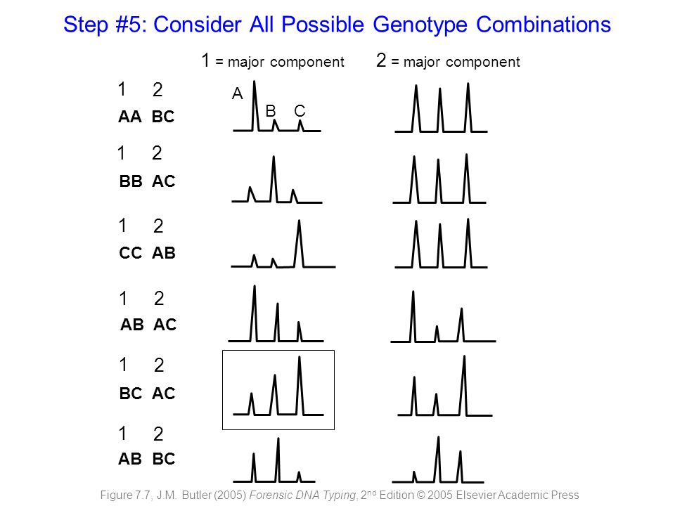 Step #5: Consider All Possible Genotype Combinations