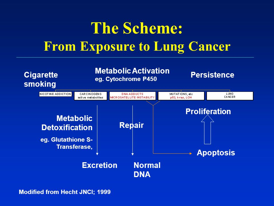 The Scheme: From Exposure to Lung Cancer