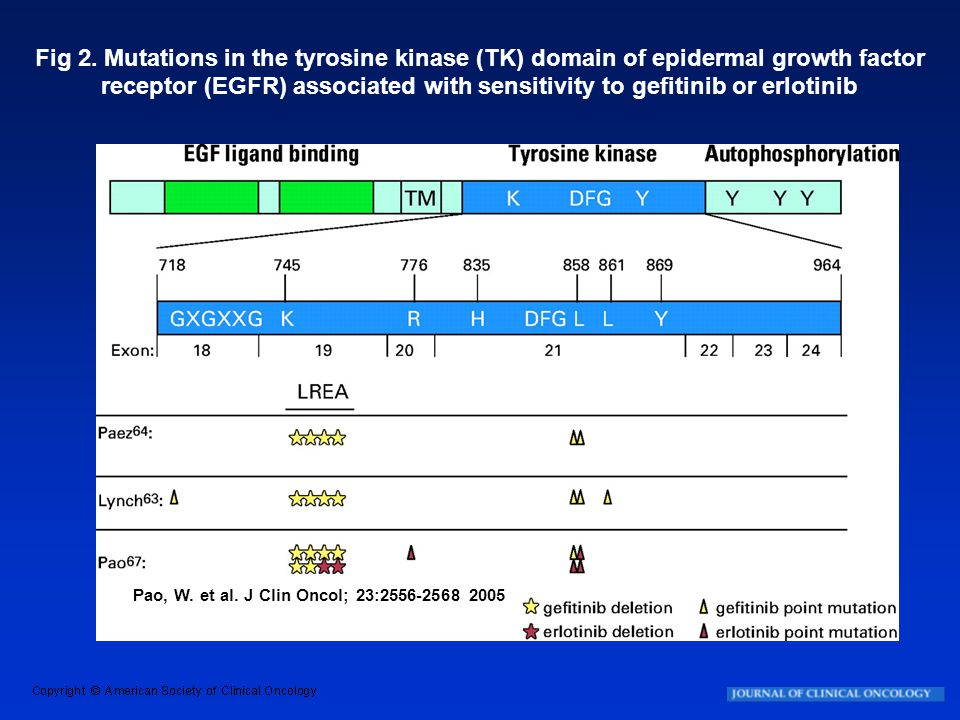 Fig 2. Mutations in the tyrosine kinase (TK) domain of epidermal growth factor receptor (EGFR) associated with sensitivity to gefitinib or erlotinib