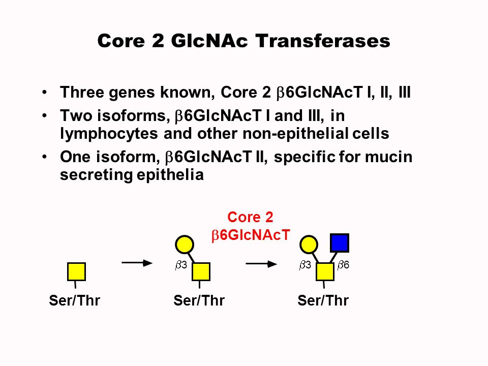 Core 2 GlcNAc Transferases