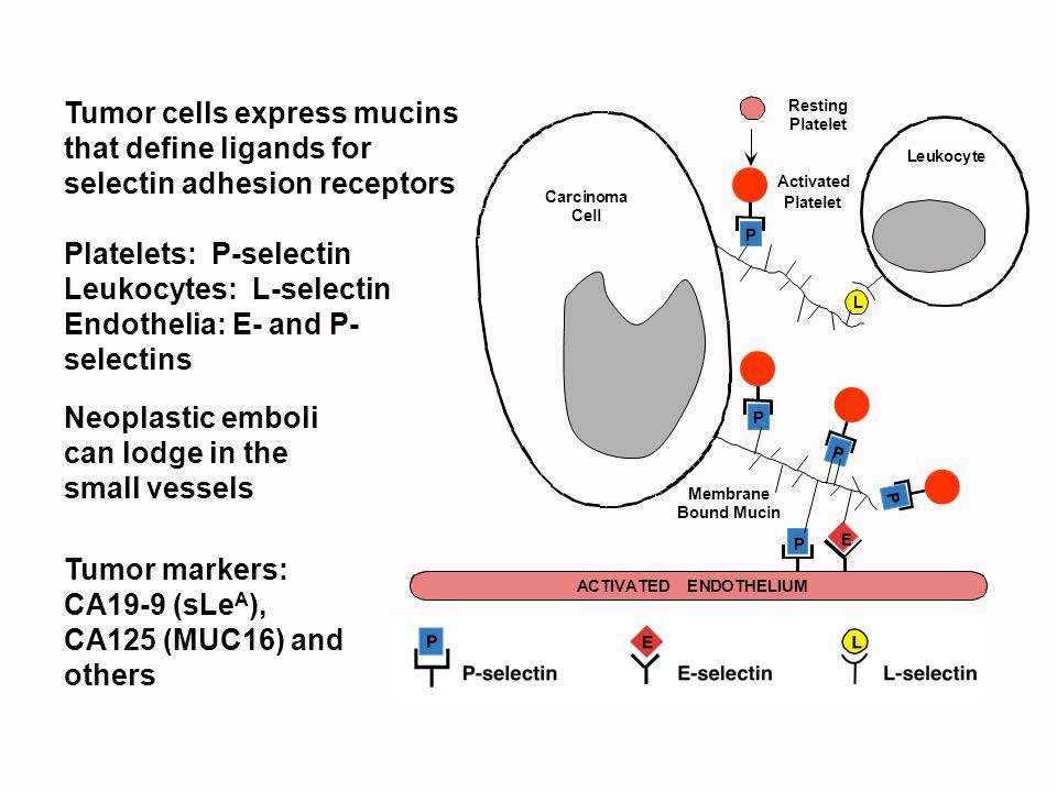 Platelets: P-selectin Leukocytes: L-selectin