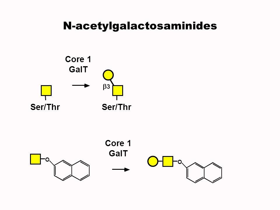 N-acetylgalactosaminides