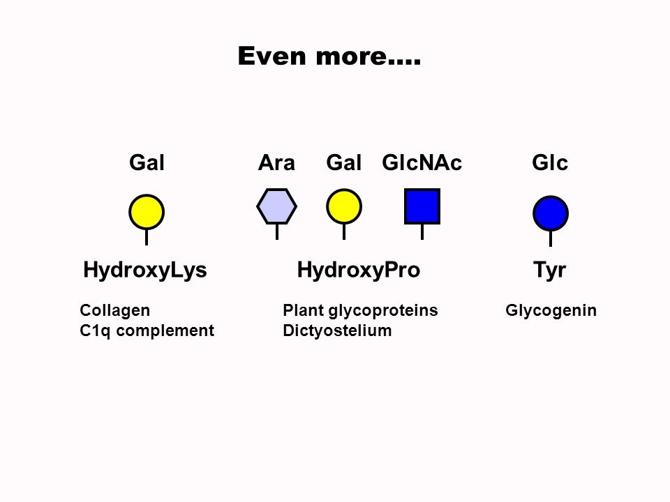 Even more…. HydroxyLys Gal HydroxyPro Ara Gal GlcNAc Tyr Glc Collagen