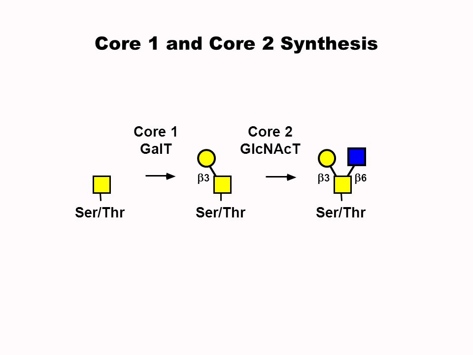 Core 1 and Core 2 Synthesis