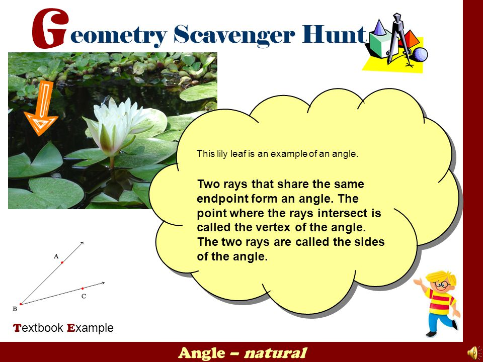 This lily leaf is an example of an angle.