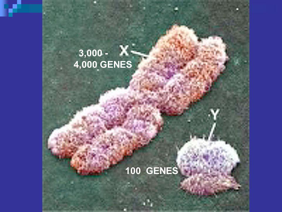 3,000 - 4,000 GENES 100 GENES