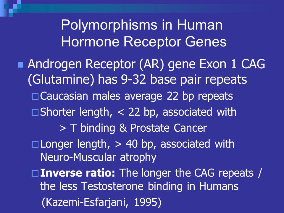 Polymorphisms in Human Hormone Receptor Genes