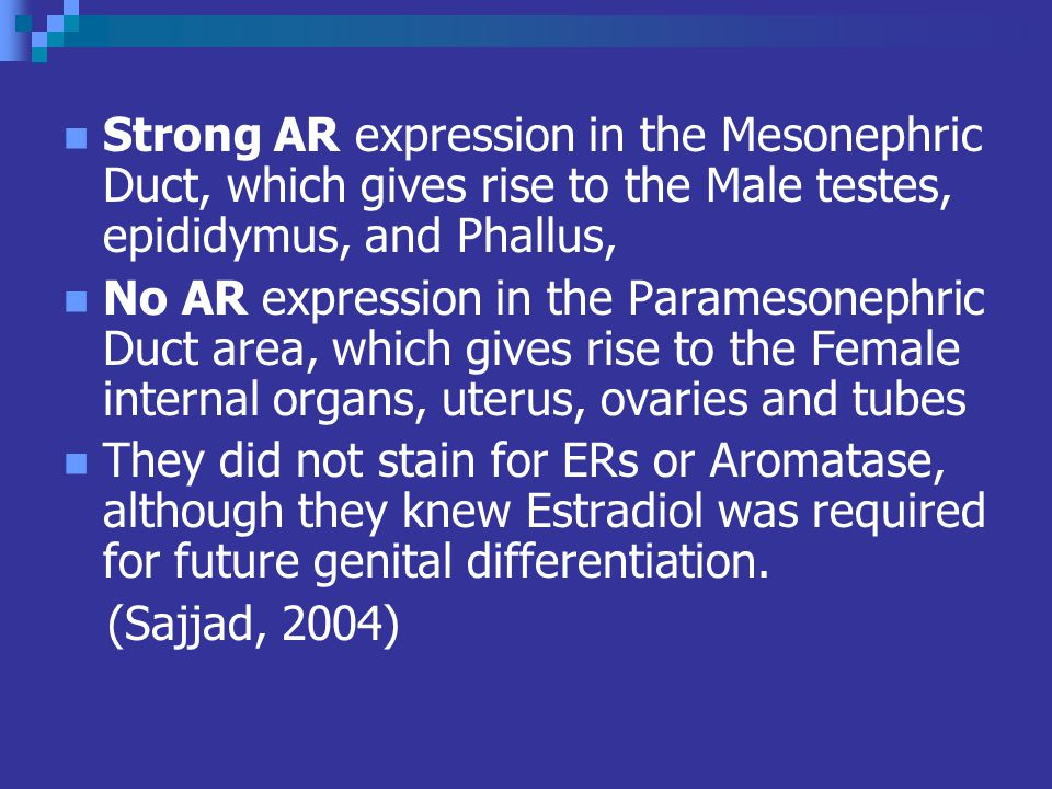 Strong AR expression in the Mesonephric Duct, which gives rise to the Male testes, epididymus, and Phallus,