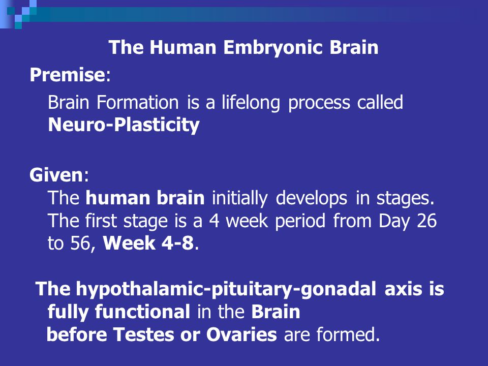 The Human Embryonic Brain