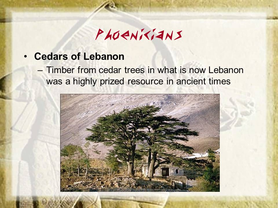 Phoenicians Cedars of Lebanon