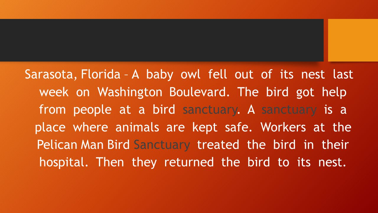 Sarasota, Florida – A baby owl fell out of its nest last week on Washington Boulevard.