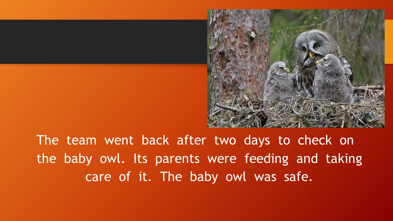 The team went back after two days to check on the baby owl