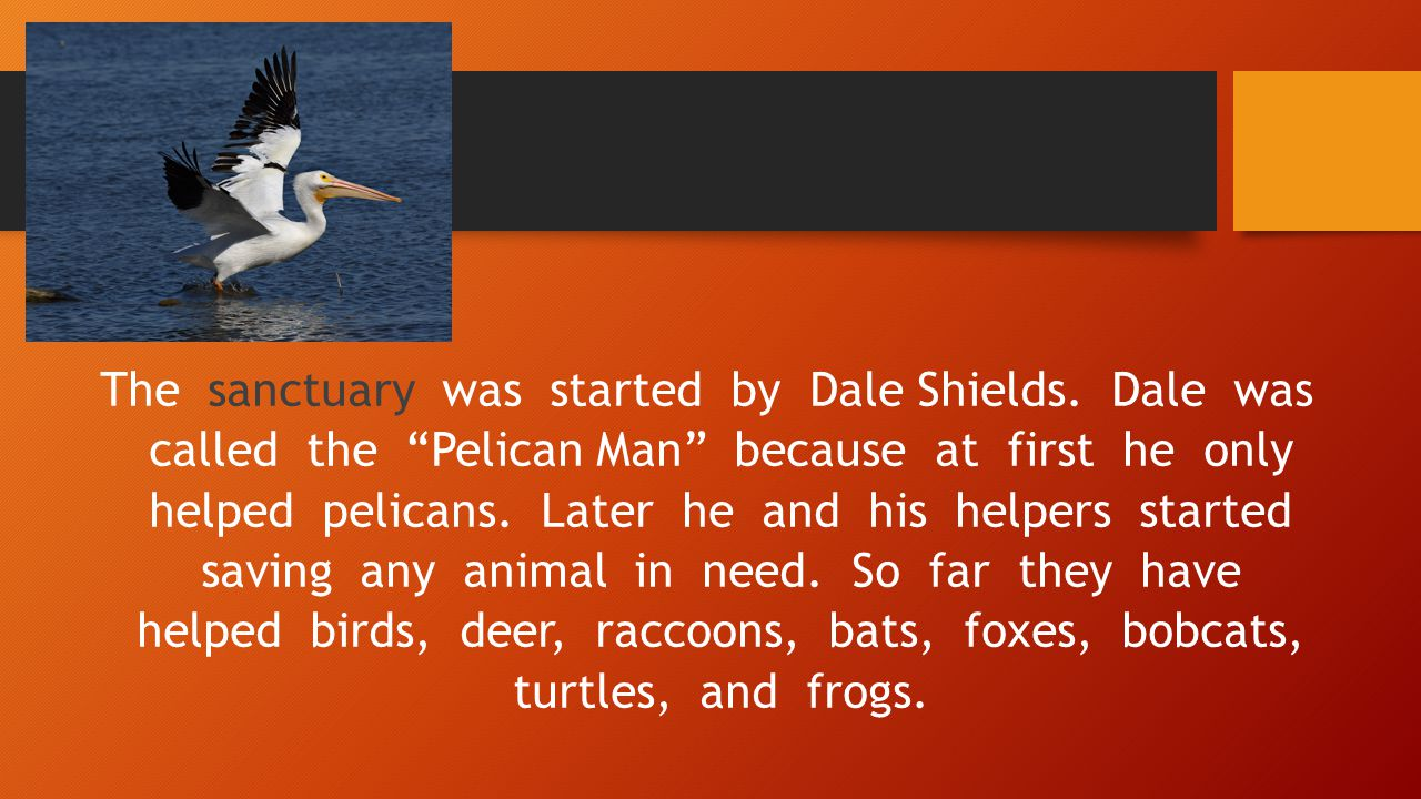 The sanctuary was started by Dale Shields