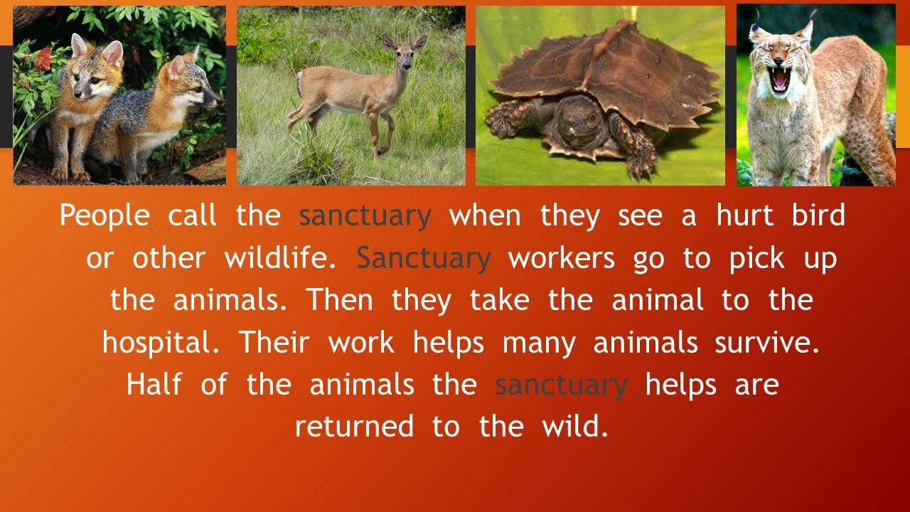 People call the sanctuary when they see a hurt bird or other wildlife