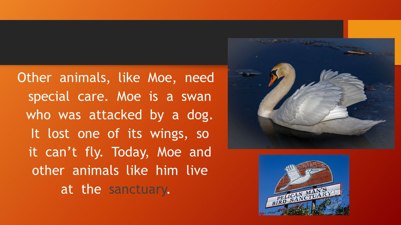 Other animals, like Moe, need special care