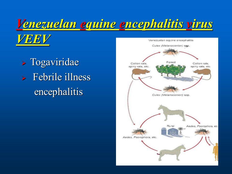 Venezuelan equine encephalitis virus VEEV