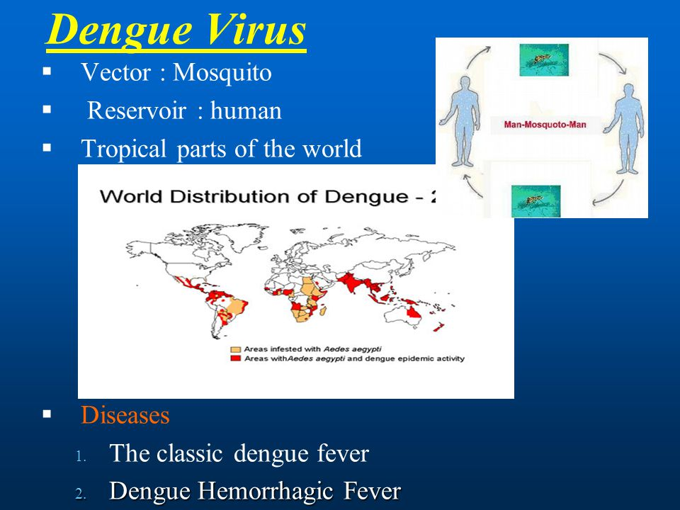 Dengue Virus Vector : Mosquito Reservoir : human