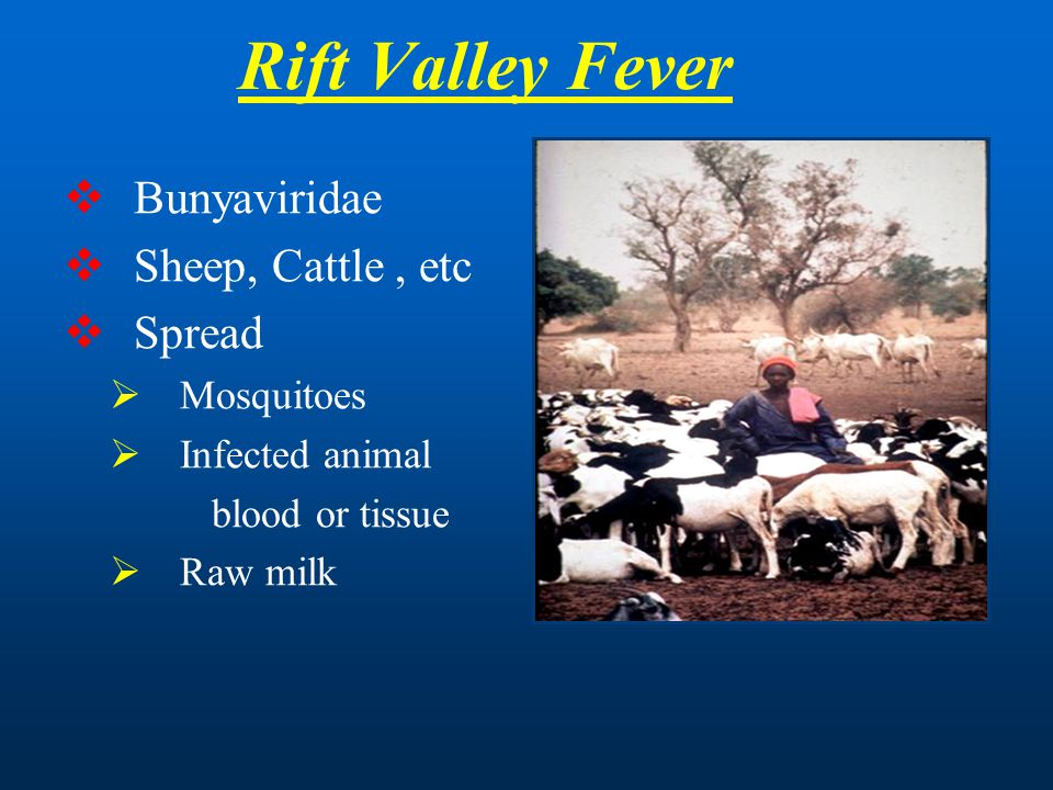 Rift Valley Fever Bunyaviridae Sheep, Cattle , etc Spread Mosquitoes