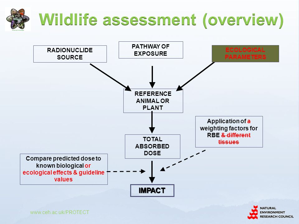 Wildlife assessment (overview)