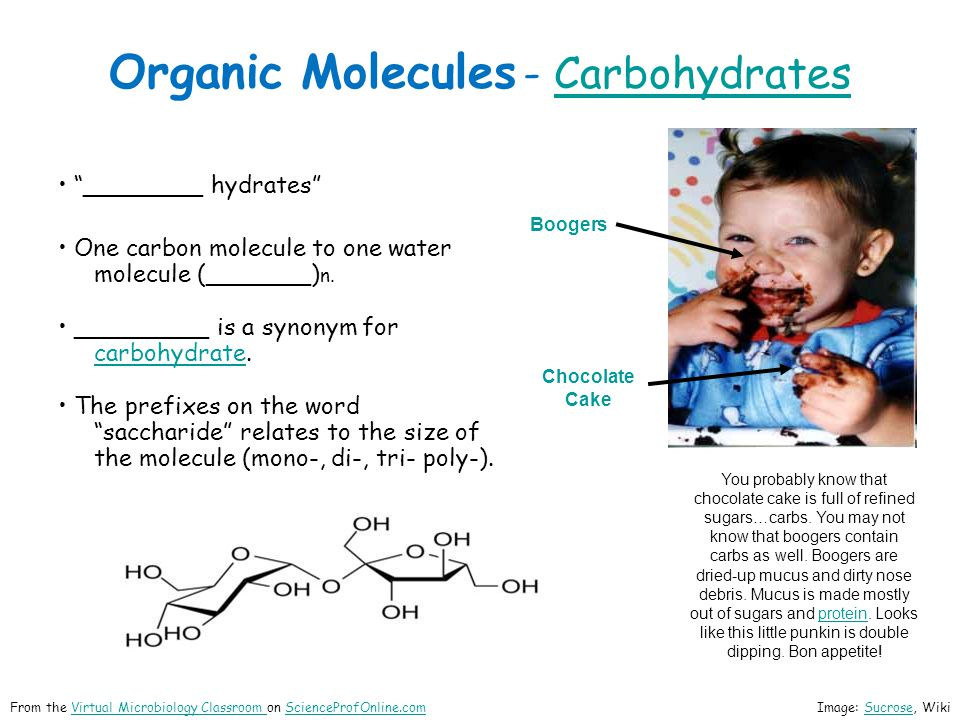 Organic Molecules - Carbohydrates