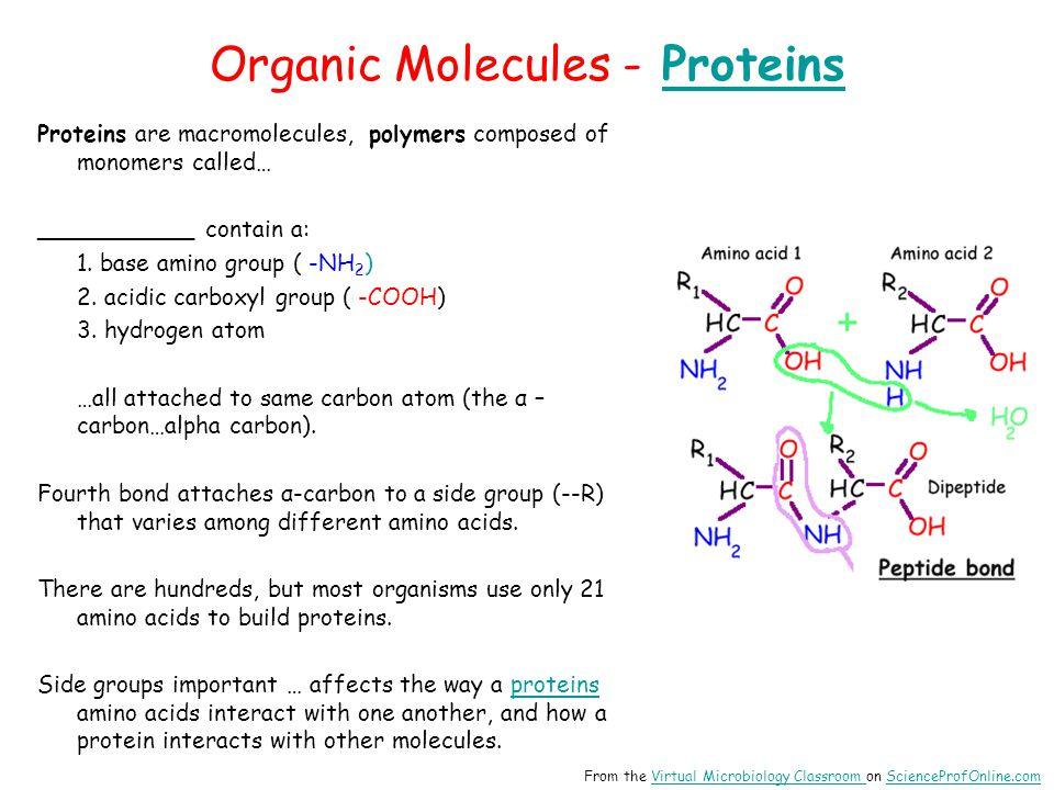 Organic Molecules - Proteins