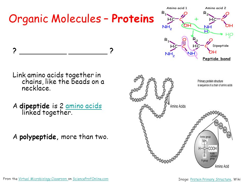 Organic Molecules – Proteins